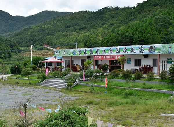 粤东蓝莓基地