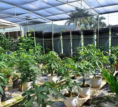 园艺绿化种植首选梅州平远陈政花木