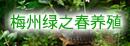 梅州绿之春养殖